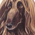 Afghan Hound Vignette by Anita Putman