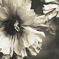 Age Of Change... by  The Art Of Marilyn Ridoutt-Greene