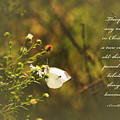 Psalm 27v1 Photograph By Debbie Nobile