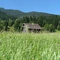 Alpine Meadow  by Carol Groenen