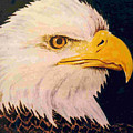 American Bald Eagle by Dy Witt