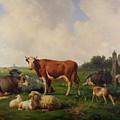 Animals Grazing In A Meadow  by Hendrikus van de Sende Baachyssun