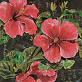 Antique Hibiscus Black 2 by Debbie DeWitt