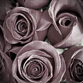 Antique Roses by Edward Fielding
