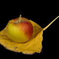 Apple Harvest Autumn Leaf by James BO  Insogna
