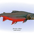 Arctic Charr by Ralph Martens