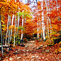 Arethusa Falls Trail by Greg Fortier