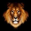 Artistic Lion by Aimelle
