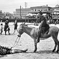Atlantic City: Donkey by Granger