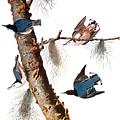Audubon: Nuthatch by Granger