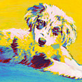 Aussie Puppy-yellow by Jane Schnetlage