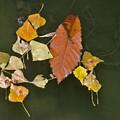 Autumn 1 by Kenton Smith