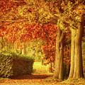 Autumn Colors by Wim Lanclus