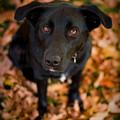 Autumn Dog by Adam Romanowicz