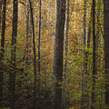 Autumn In The Woods by Andrew Soundarajan