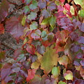 Autumn Ivy by Jessica Rose