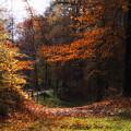 Autumn Landscape by Artecco Fine Art Photography