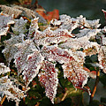 Autumn Leaves In A Frozen Winter World by Christine Till