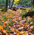 Autumn Path by Mike  Dawson