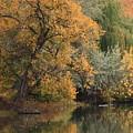 Autumn Riverbank by Carol Groenen