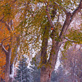 Autumn Snow Park Bench   by James BO  Insogna