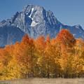 Autumn Splendor In Grand Teton by Sandra Bronstein