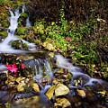 Autumn Stream by Chad Dutson