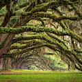 Avenue Of Oaks - Charleston Sc Plantation Live Oak Trees Forest Landscape by Dave Allen