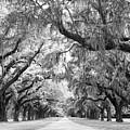 Avenue Of Oaks Charleston South Carolina by Stephanie McDowell
