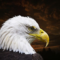 Bald Eagle - Freedom And Hope - Artist Cris Hayes by Cris Hayes