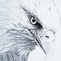 Bald Eagle by Nancy Rucker