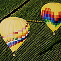 Balloons Over Napa Valley by Cindy Lee Longhini