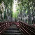 Bamboo Forest Of Japan by Daniel Hagerman