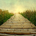 Bamboo Path In Grass At Sunrise by Atul Tater