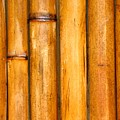 Bamboo Poles by Yali Shi