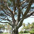 Banyan Tree by Anna Villarreal Garbis