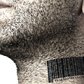 Bar Code On Neck by Blink Images