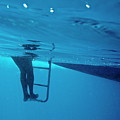 Bare Legs Descending Underwater From The Ladder Of A Boat by Sami Sarkis