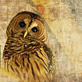 Barred Owl by Lois Bryan
