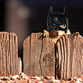 Bat Squirrel  The Cape Crusader Known For Putting Away Nuts.  by James BO  Insogna