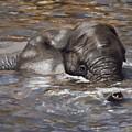 Bath Time - African Elephant In The Water by Elizabeth Rieke Hefley