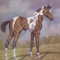 Bay Paint Foal by Dorothy Coatsworth