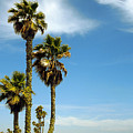 Beach View With Palms And Birds by Ben and Raisa Gertsberg