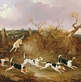Beagles In Full Cry by John Dalby
