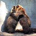 Bear Hugs. No.2 by RL Clough