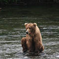 Bear Sitting On Water by Tracey Hunnewell