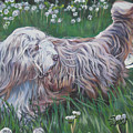 Bearded Collie by Lee Ann Shepard