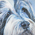 Bearded Collie Up Close In Snow by Lee Ann Shepard