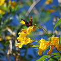 Beautiful Butterfly by Donna Greene