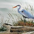 Beautiful Heron Shore by James Williamson